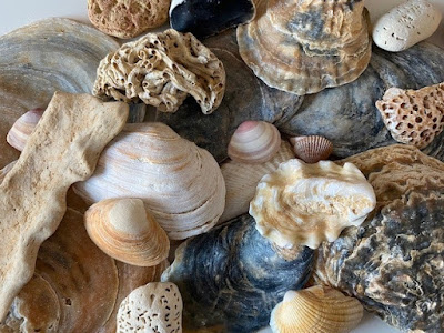 Collection of shells and stones found while beachcombing