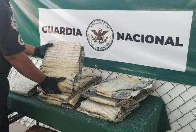 EN AEROPUERTO DE SAN LUIS POTOSÍ, GUARDIA NACIONAL INTERCEPTA 9 PIEZAS DE PIEL DE COCODRILO