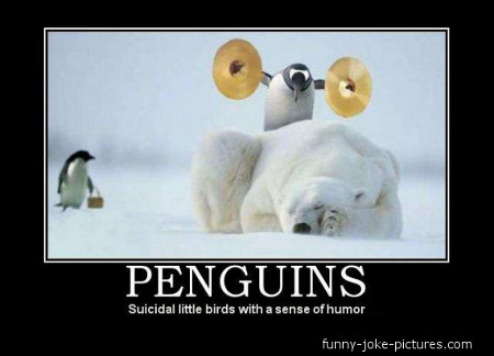 Funny Penguin Meme Joke Photo