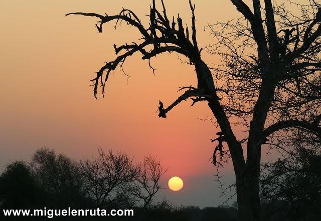 Safari-por-libre-en-Kruger-Shukuza-atardecer-Shukuza