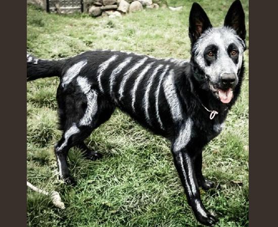 Fantasias Halloween - Cão Caveira
