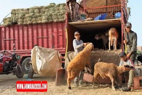 أخبار المغرب: هذه قواعد صحية للتعامل مع أضاحي العيد في زمن فيروس كورونا بالمغرب covid-19 corona virus كوفيد-19