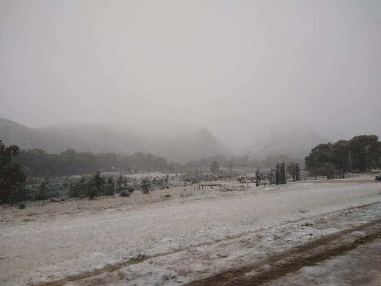 nieve-tornquist