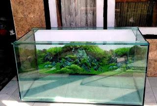 cara merawat aquarium ikan hias agar air tetap jernih