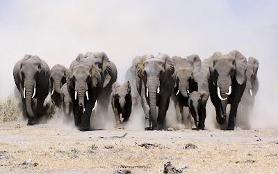 Best Elephant Wallpaper ,pics,images