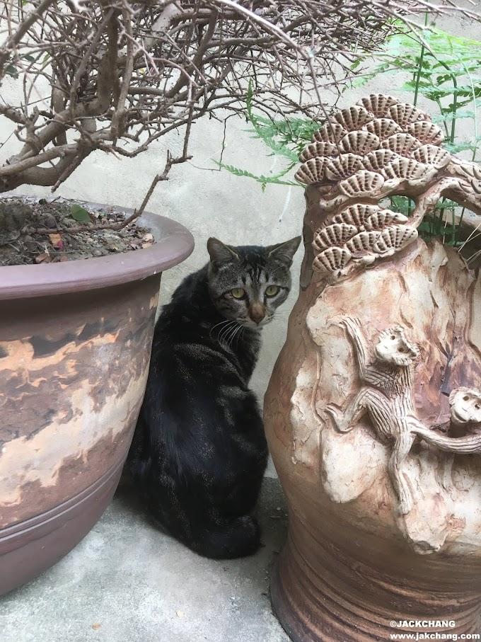 生活 小寶成長日記番外篇EP.01-來去自如的貓咪朋友