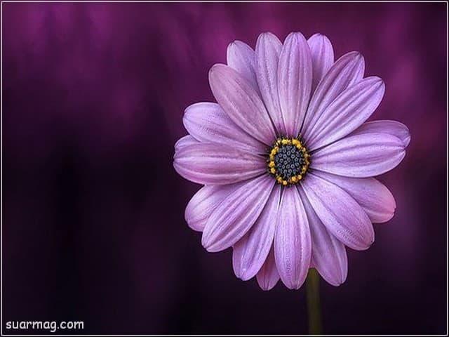 صور ورد 11 | Flowers Photos 11