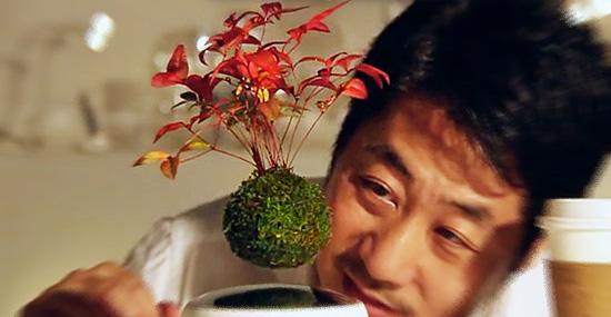 Árvore flutuante de verdade! Bonsai que levita é nova invenção japonesa!