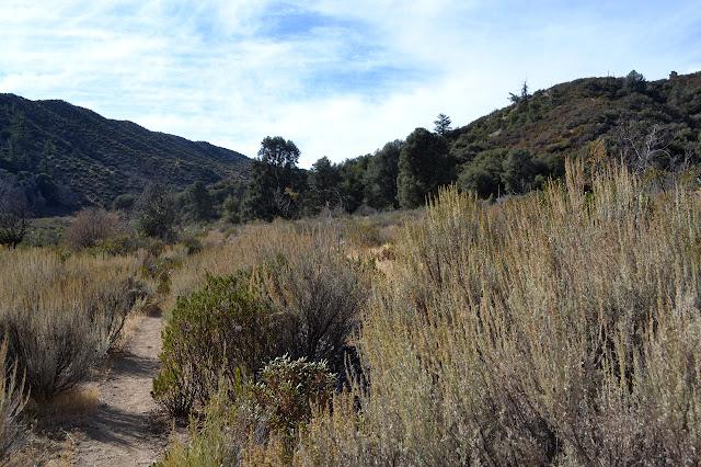 Tinta Trail
