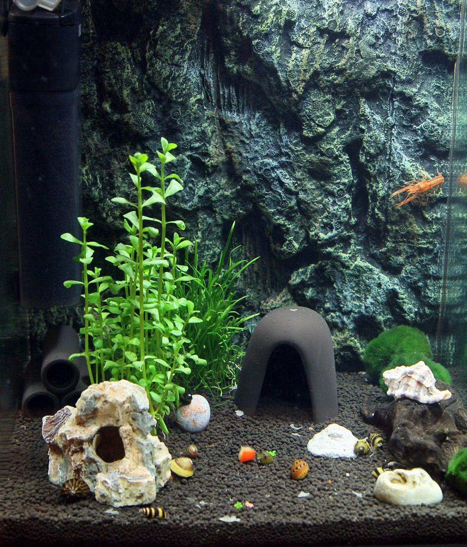 Nano Aquarium f u00fcr Anf u00e4nger  Fitz, wie haste Dir ver u00e4nd