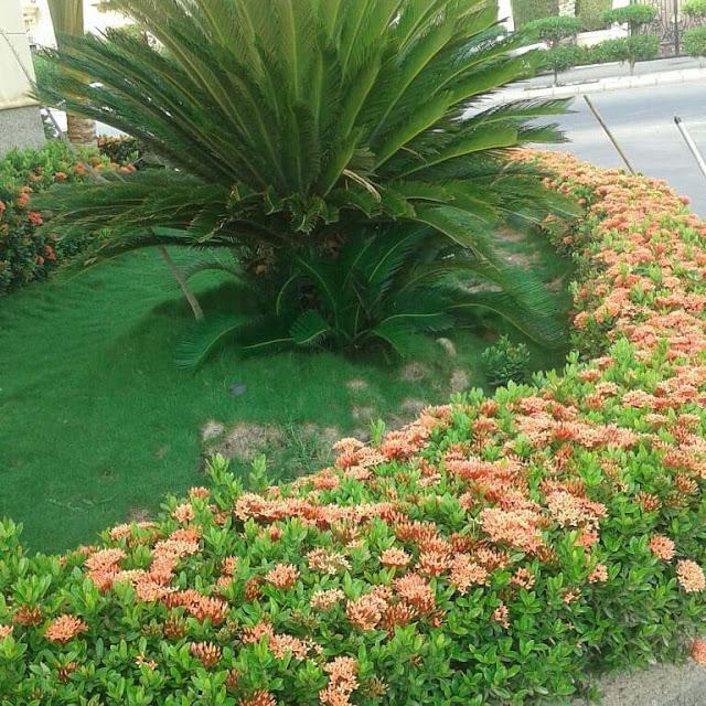 تنسيق حدائق المنطقة الشرقية وتوريد العشب الصناعي بالمنطقة الشرقية