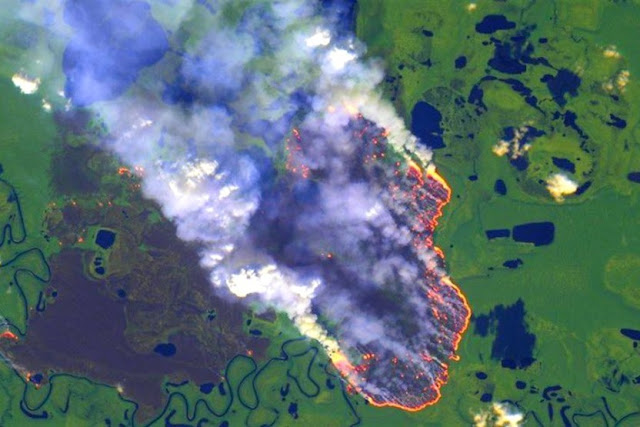 Καίνε τα δάση του Αμαζονίου καταστρέφουν τους πνεύμονες της Γης Video