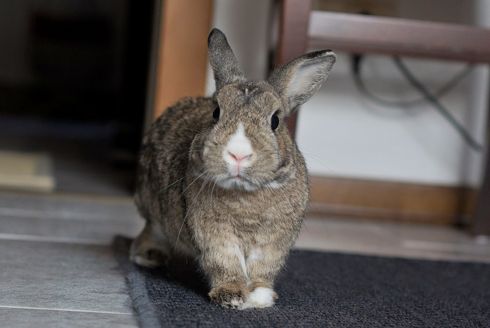 The Disapproving Rabbit