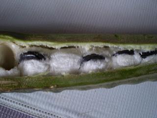 Guava food