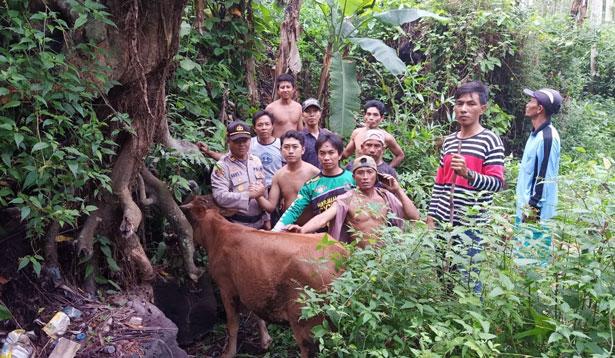 Sapi ditemukan di Desa Bades