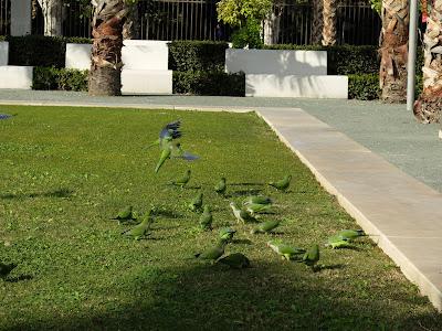 マラガの鳥