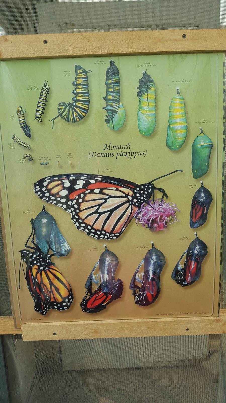 Saskatoon Forestry Farm Butterfly Garden
