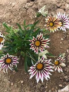çiçek sevgisi konulu yazı