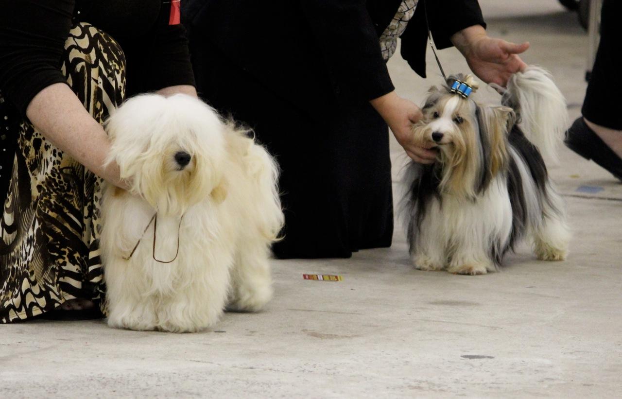 To Dog With Love: Fun Times at an IABCA Dog Show