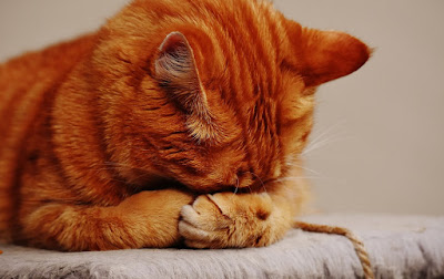 Why Do Cats Change Their Sleeping Areas? Is it a Sign of Sickness?