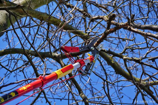przycinanie gałęzi na wysokich drzewach