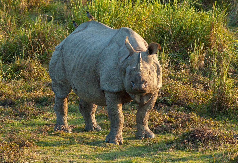 Image result for गोरुमारा राष्ट्रीय उद्यान
