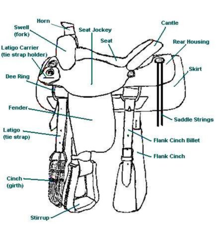 western saddle diagram lockwood horses: horse parts and saddles and briddles