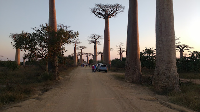 alley baobab sunset morondava