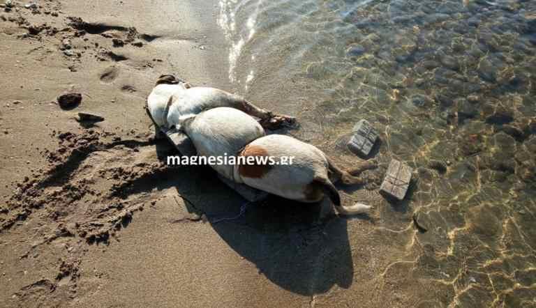 Βόλος: Σκότωσε τον σκύλο με τρόπο ανατριχιαστικό