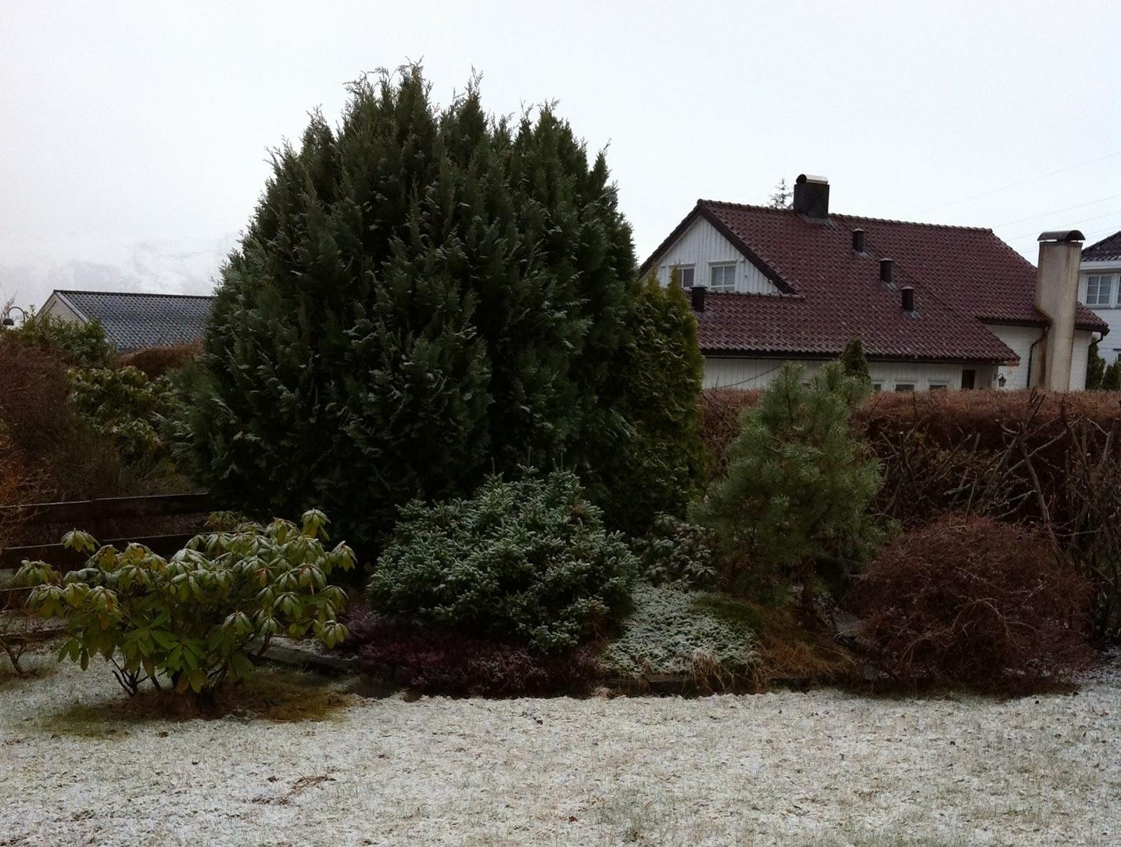 Liv og Gus i hytte og hus: Vintergrønne busker og trær