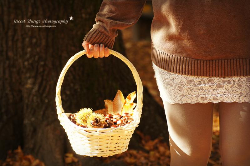 Maronen sammeln mit Korb in der Hand