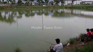 Essen Ikan Lele Di Danau Dari Master Essen