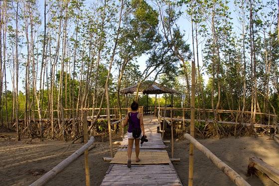 Bakhawan Eco Park Kalibo, Aklan