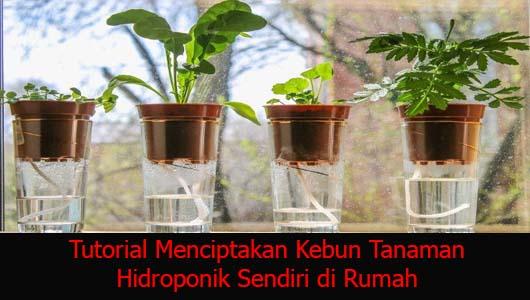 Tutorial Menciptakan Kebun Tanaman Hidroponik Sendiri di Rumah