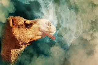 camel smoking cigar
