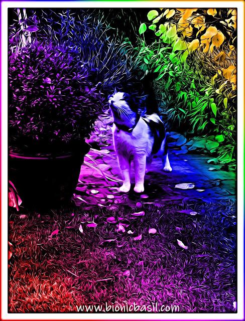 Melvyn's Seasonal Selfie ©BionicBasil® Caturday Art Hop