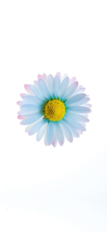 beautiful white flower wallpaper