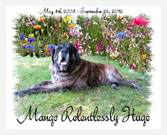 We Miss You Mango