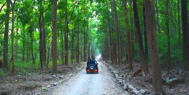 Jim Corbett National Park, Travel Diary with True story