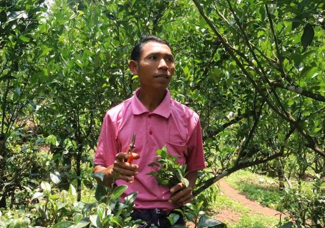 အိခ်ယ္ရီေအာင္ (Myanmar Now) ● လိေမၼာ္ကိုလည္း ျပည္ပပို႔ကုန္ ျဖစ္ေစခ်င္ပါတယ္