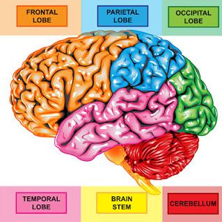 sistem saraf pusat pada manusia  sistem saraf tepi  sistem saraf pusat ppt  pengertian sistem saraf pusat  anatomi sistem saraf pusat  fungsi sistem saraf pusat  sistem saraf otonom  makalah sistem saraf pusat