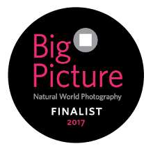 Big Picture Natural World Photography Competition