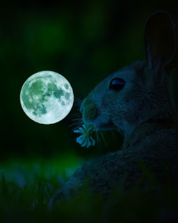 Ever wonder why rabbits have a slit in their nose? The African folktale Why the Rabbits Nose is Slit explains the mystery.