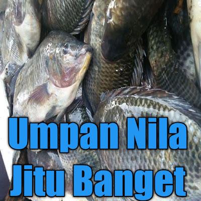 umpan jitu ikan nila liar yang berada di sungai, kolam dan rawa asli jitu banget