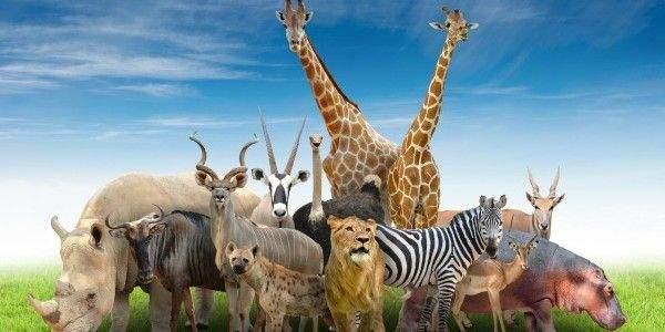 Poem animals