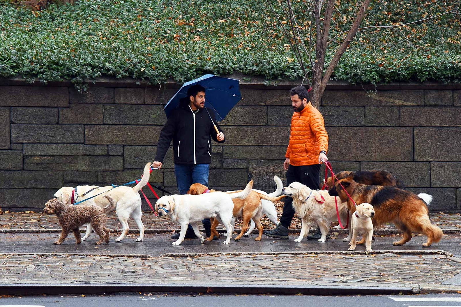 Dog walkers in New York City