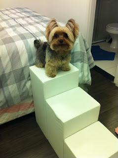 escadas para cães raças pequenas