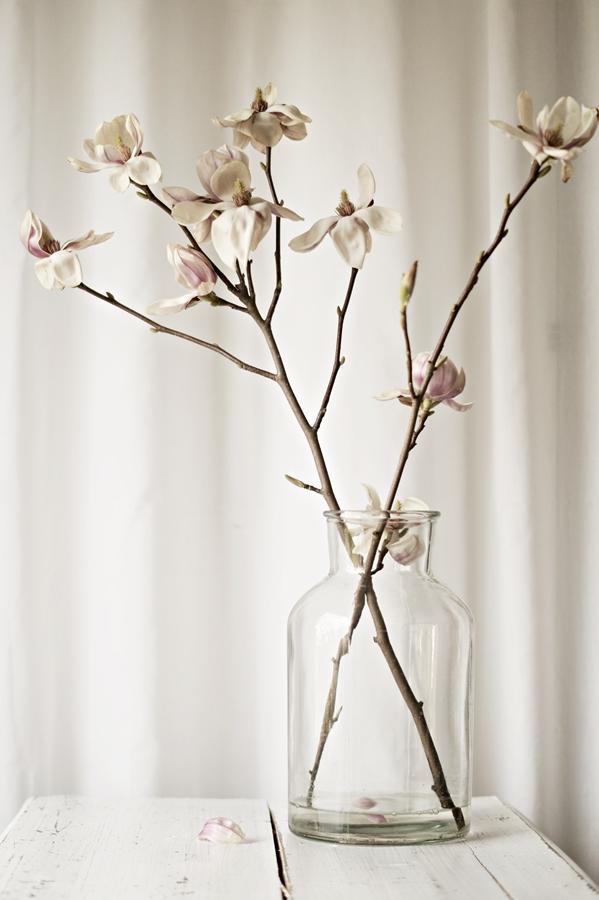 aufgeblühter Magnolienzweig in weißer Umgebung