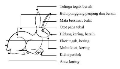 Tips Kelinci Anda Tetap sehat