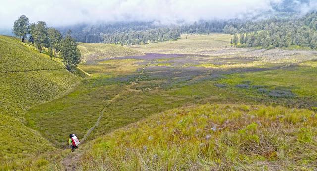 Padang Bunga Verbena, Oro-oro Ombo